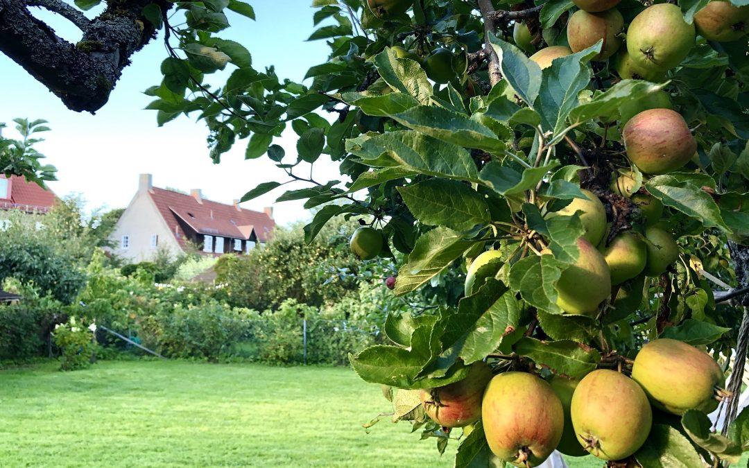 De vil plukke epler i hagen din